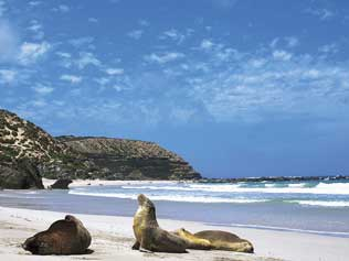 seal bay south coast kangaroo island