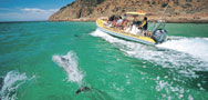 swim with dolphins south australia
