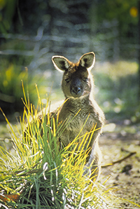 kangaroo island wilderness tour holiday